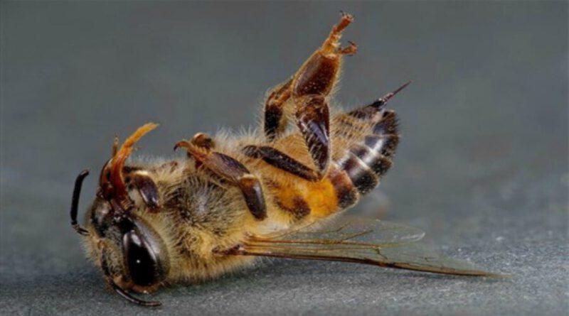 Türkiye'de Arı Ölümleri ve Sebepleri