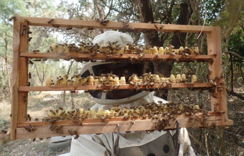 Ana Arı Yetiştiriciliği Kursu Kayıtları Başladı