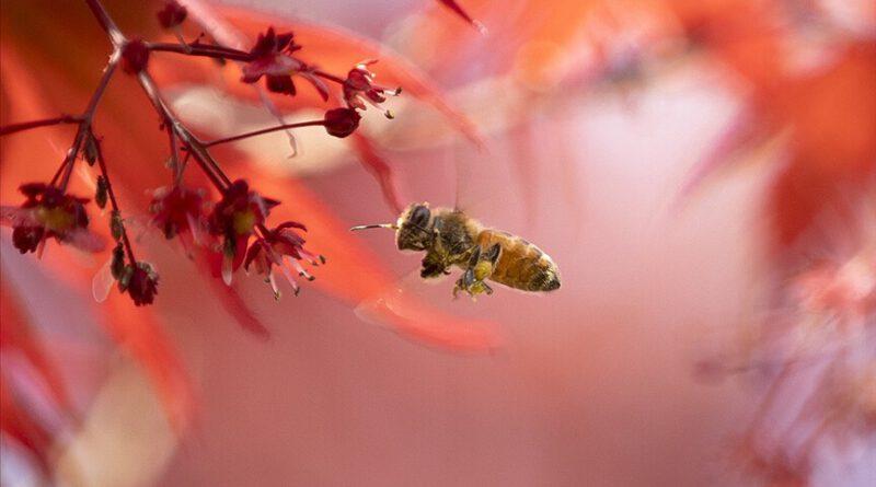 İklim değişikliği ve bilinçsiz zirai ilaç kullanımı Türkiye'de arı kayıplarını artırdı