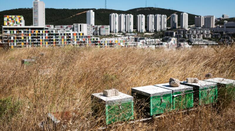 Atlas Dergisi Metropolün Arıları Röportajımız