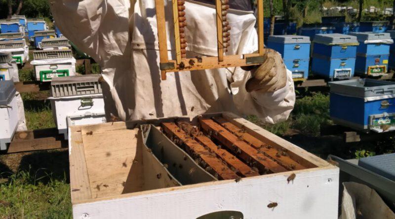 Birlik Üyesi Üreticilerimizle Arı Sütü Üretimi Projemiz Başladı