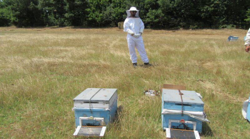 Arı Zehiri Üretimi Projesine Başladık