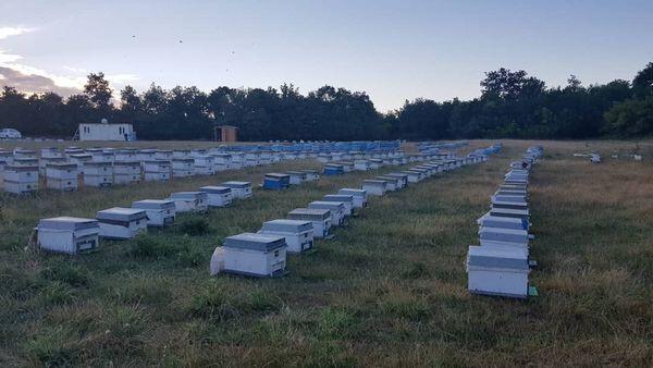 Arısütü Üretim İstasyonumuz Faaliyete Başladı
